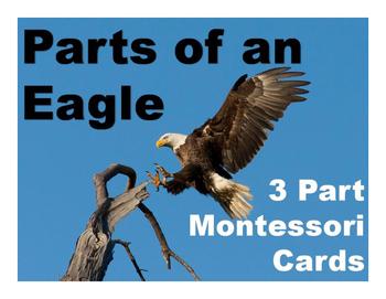 Parts of an Eagle Montessori Three Part Vocabulary Cards c
