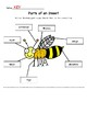 Parts of an Insect Cut & Paste