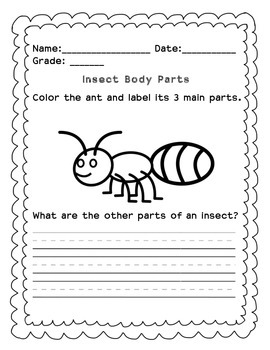Parts of an Insect Worksheet