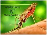Parts of an Insect and Life Cycle Powerpoint