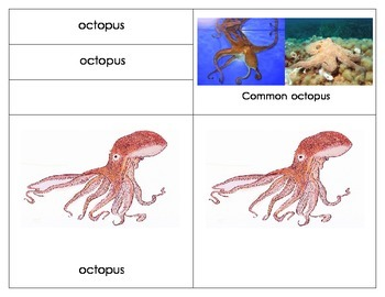 Parts of an Octopus