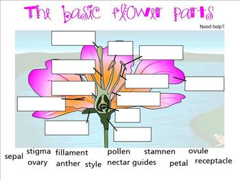 Parts of flower for SmartBoard
