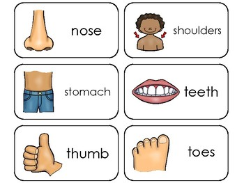 Parts of My Body Printable Flashcards. Preschool Health. by Teach At ...