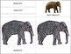 Asia: Parts of the Asian Elephant and  Elaphant Mini Matching Cards
