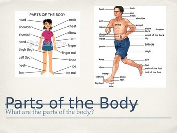 Parts of the Body PPT for ESL