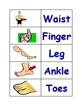 Parts of the Body Sort Cards