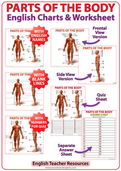 Parts of the Body in English - ESL Charts