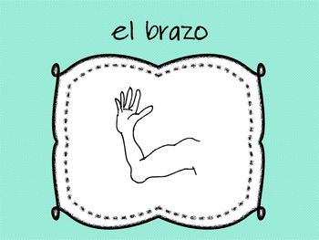 Parts of the Body in Spanish-Las partes del - PP
