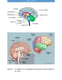 Parts of the Brain Activity
