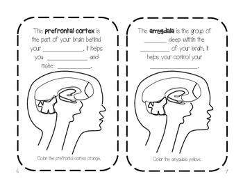 "Parts of the Brain ""Brain Book"" Activity"