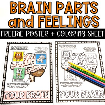 Parts of the Brain Feelings Poster and Coloring Sheet FREEBIE
