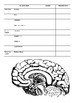 Parts of the Brain Graphic Organizer and Brain Map