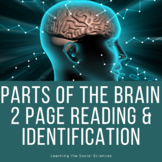 Parts of the Brain Reading and Identification Activity - D