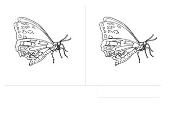 Parts of the Butterfly - Montessori 3 Part Scientific Nomenclature Cards