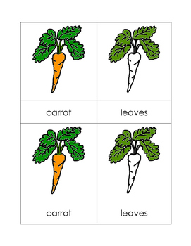 Parts of the Carrot Nomenclature Cards