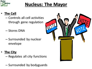 Parts of the Cell (Like a city) & Cellular Transport