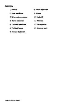 Parts of the Chloroplast Quiz/Worksheet for Biology I