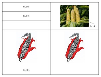 Parts of the Corn ear