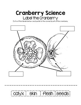 Parts of the Cranberry Worksheet