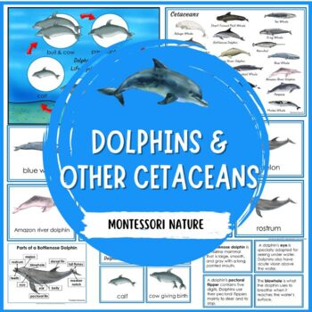 Parts of the Dolphin Montessori 3 Part Cards