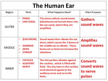 Parts of the Ear Power Point, Notes and Graphic Organizer