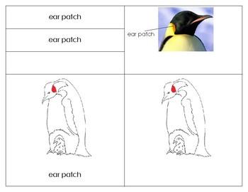 Parts of the Emperor Penguin