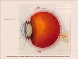 The Human Eye activity bundle