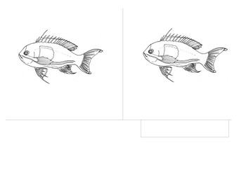 Parts of the Fish - Montessori 3 Part Scientific Nomenclature Cards, 14 cm