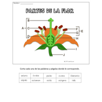 Parts of the Flower Cut and Paste Activity