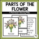 Parts of the Flower | Nature Curriculum in Cards | Montessori