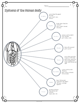 Parts of the Human Body Diagram & Comprehension Questions