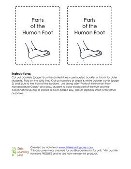 Parts of the Human Foot Booklet