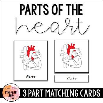 Anatomy of the Human Heart 3 Part Cards