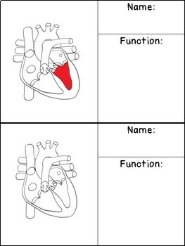 Anatomy of the Human Heart Flip Book