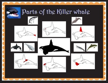 Parts of the Killer whale and whales three part matching cards