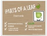 Parts of the Leaf : Montessori 3 Part Cards