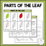 Parts of the Leaf | Nature Curriculum in Cards | Montessori