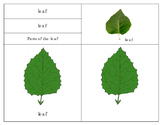 Parts of the Leaf, Simple and Compound Leaves : Three Part Cards