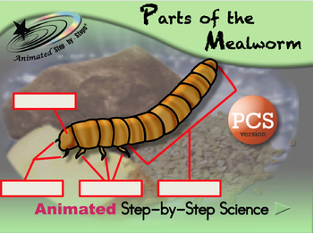 Parts of the Mealworm - Animated Step-by-Step Science Proj