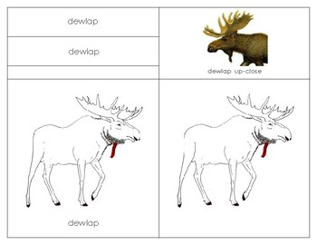Parts of the Moose: