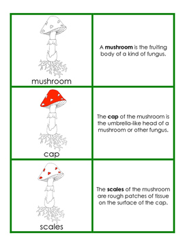 Parts of the Mushroom Definition Cards