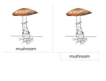 diagram of a mushroom parts of the mushroom montesssori 3 part scientific nomenclature diagram of a typical mushroom parts of the mushroom montesssori 3