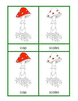 Parts of the Mushroom Nomenclature Cards