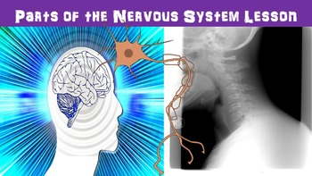 Nervous System Parts No Prep Lesson with Power Point, Worksheet, and Activity