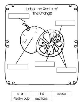 Parts of the Orange Worksheet