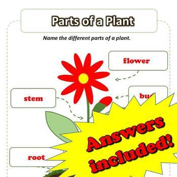 Parts of the Plant - ScienceWorkbook