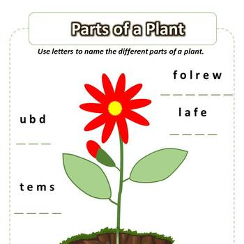 Parts of the Plant Worksheet – Name the Parts