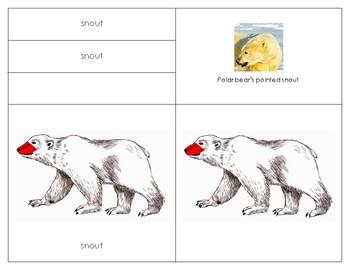 Parts of the Polar bear: Three Part Card Set