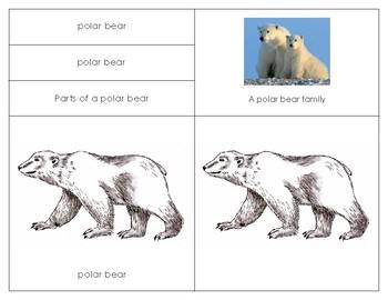 Parts of the Polar bear: Four Part Card Set