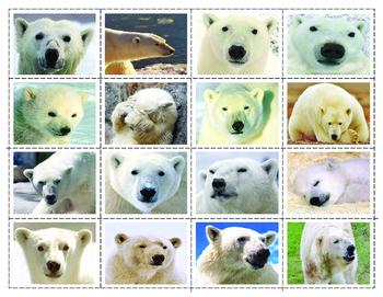 Parts of the Polar bear: Super Bundle